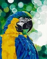 Brilliant Parrot Fine-Art Print