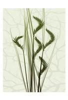 Toned Greens 1 Fine-Art Print