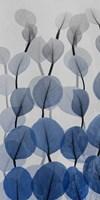 Sapphire Bunch 1 Fine-Art Print