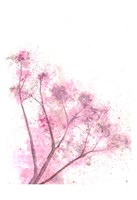 Whisper Pink Fine-Art Print