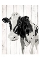 Cow On The Plank Fine-Art Print