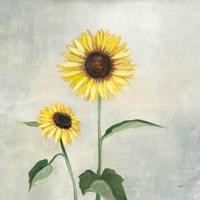 Sunny Blooms I Fine-Art Print