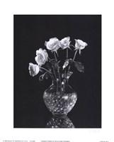 Dramatic Roses Fine-Art Print