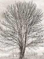 Nesting Place Fine-Art Print