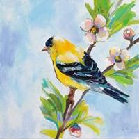 Golden Finch Fine-Art Print