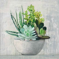 Succulent Still Life II Fine-Art Print