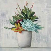 Succulent Still Life I Fine-Art Print