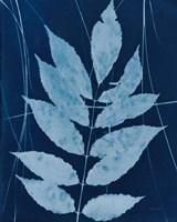Enchanted Cyanotype IX Fine-Art Print