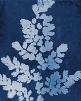 Enchanted Cyanotype VII Fine-Art Print