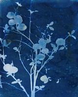 Enchanted Cyanotype VI Fine-Art Print