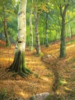 Sentiero nel Bosco Fine-Art Print