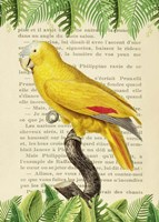 The Blue-Fronted Parrot, After Levaillant Fine-Art Print