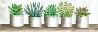 Succulent Pots Fine-Art Print