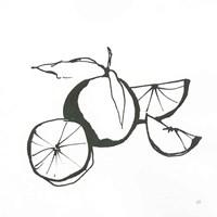 Oranges BW Fine-Art Print