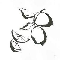 Limes BW Fine-Art Print