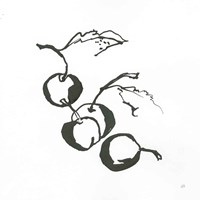 Cherries BW Fine-Art Print