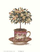 Tea Topiary #6 Fine-Art Print