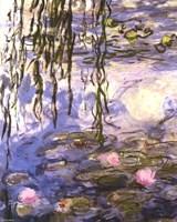 Waterlilies (pink flowers) Fine-Art Print