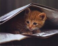 Smart Cat Fine-Art Print
