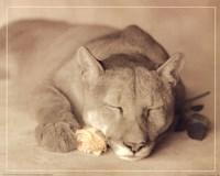 Lion with Rose Fine-Art Print