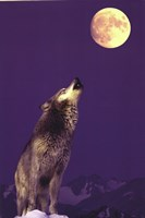 Gray Wolf Howling At Moon Fine-Art Print
