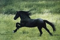 Black Horse Running Fine-Art Print
