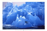 Penguins on Blue Ice Fine-Art Print