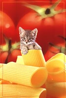 Kitten On Pasta Fine-Art Print