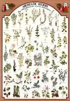 Aromatic Herbs Fine-Art Print