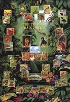 Tropical Rain Forest Fine-Art Print