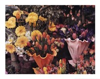Flowers, Florence Fine-Art Print
