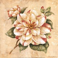 Camellia Fine-Art Print