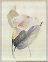 Calla Lily III Fine-Art Print