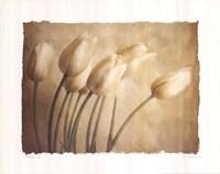 Aria II Fine-Art Print