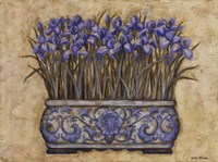 Blue Irises Fine-Art Print