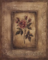 Savin Rose Fine-Art Print