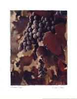 Autumn Print Fine-Art Print