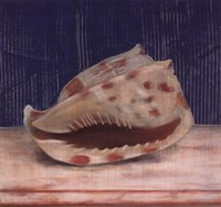 Brown Spotted Shell Fine-Art Print