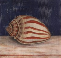 Striped Shell Fine-Art Print