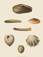 Shells-1 of 8 Fine-Art Print