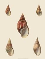 Shells-2 of 8 Fine-Art Print
