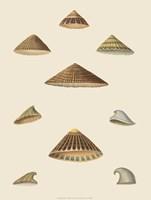 Shells-3 of 8 Fine-Art Print