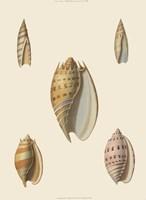 Shells-4 of 8 Fine-Art Print