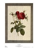 Grandiflora I Fine-Art Print