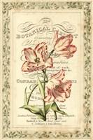 Botanic Cabinet Fine-Art Print