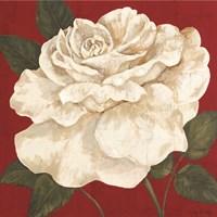 Rosa Blanca Grande II Fine-Art Print