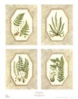 Four Fancy Ferns Fine-Art Print