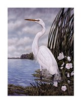 Great White Egret Fine-Art Print