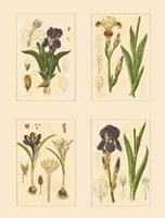 Miniature Botanicals I Fine-Art Print