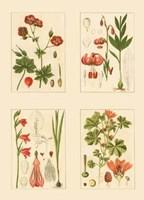 Miniature Botanicals II Fine-Art Print